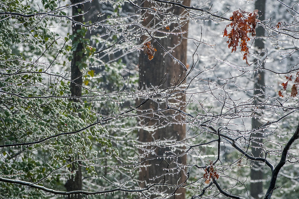Ice covered trees after a winter storm