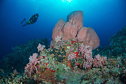 Divemaster Katya Saini explores among lush soft corals and huge barrel sponges at Ooh La La, Narcondam Island, Andaman Islands, India, MR