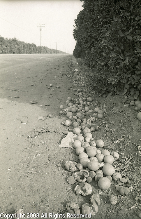 Oranges sit rotting in a California orchard during the 1991 orange freeze which cost growers millions of dollars.