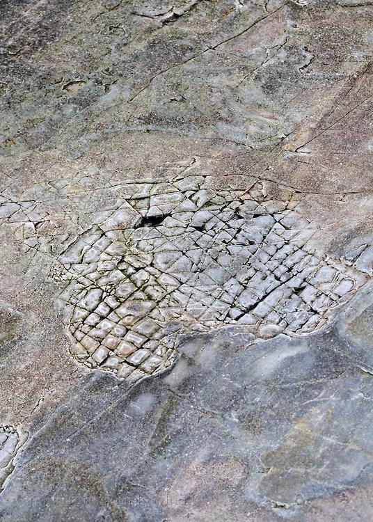 Glacial markings on Bar Harbor formation stone, Bar Harbor, Maine.