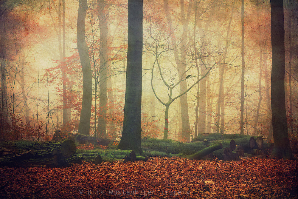 Logs in a misty forest - texturized photograph