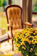 A plant with yellow flowers in the foreground with an ampty chair in the background