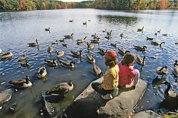 Canadian Geese & Kids