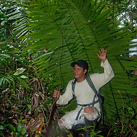 A Peruvian Amazon Indian huddles under his hastily-made palm-leaf rain shelter.