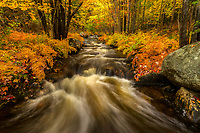 Peak fall color along Duck Brook in Acadia National Park, Maine, USA