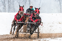 Chariot racing isn't just for Ben Hur anymore There are near as many cowgirls racing as cowboys.  Cutter races Afton Wyoming
