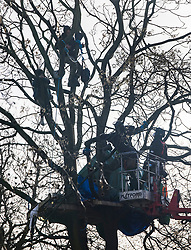 © Licensed to London News Pictures. 28/01/2021. London, UK. Bailiffs (lower right) talk to HS2 Rebellion protestors who camped in a tree above Euston Square Gardens. Protestors are resisting a police operation to remove them for a second day. It is reported the protesters have built a 100ft tunnel under the gardens. Photo credit: Peter Macdiarmid/LNP