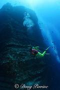 divers skirt undersea pinnacle at Vertical Awareness dive site at Lehua Rock, near Niihau Island, off Kauai, Hawaii, USA; pinnacle is formed of layered volcanic tuff ( hardened volcanic ash ) MR 305