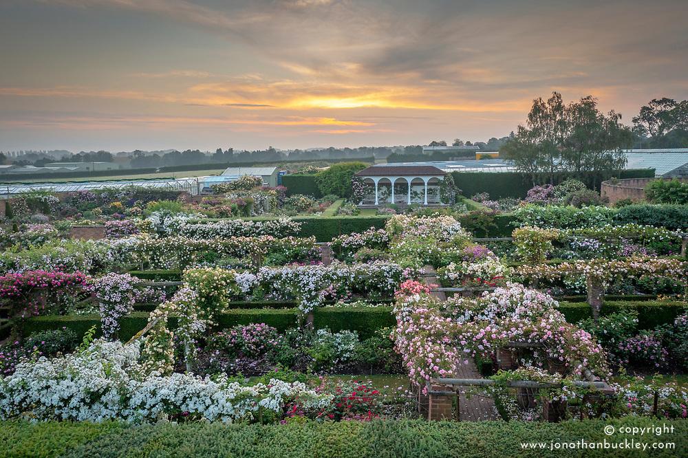 Aerial view of The David Austin Rose Gardens at dawn
