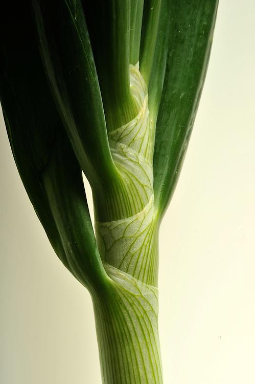 Closeup of a leek