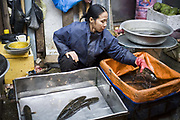 A stallholder sells seafood on a stall in the Cau Go Market, Hanoi, Vietnam