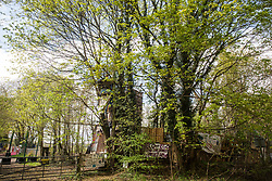 Wendover, UK. 4th May, 2021. A view of trees alongside the A413. Large areas of land are currently being cleared of trees and vegetation around Wendover in the Chilterns AONB in preparation for the HS2 high-speed rail link, with some work recently taking place after dark. Activists opposed to HS2 occupy Wendover Active Resistance Camp (also pictured) beside the A413.