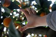 Hand reaching for an orange