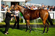 Queen of Desire ridden by Jack Mitchell and trained by Roger Varian  - Ryan Hiscott/JMP - 19/04/2019 - PR - Bath Racecourse- Bath, England - Race 5 - Good Friday Race Meeting at Bath Racecourse