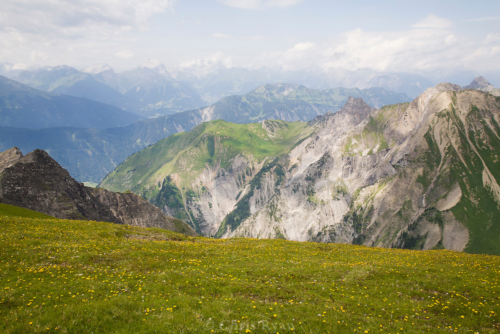 High meadow wildflowers in the west Austrian Alps
