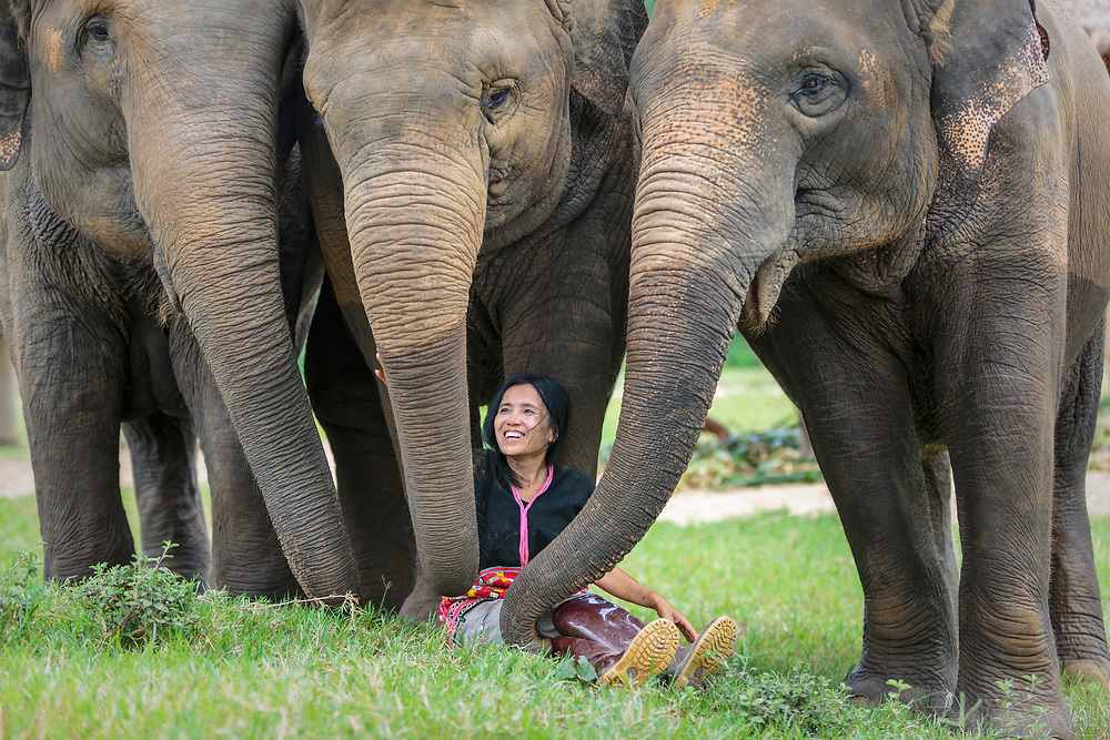 Lek Chailert founded the Elephant Nature Park, which rescues elephants from illegal logging and street begging activities. Visitors are encouraged to learn about the elephants, washing and feeding them but not riding on them, which elephant conservationists discourage. The project trains mahouts to work with elephants without using a billhook or spike. The Elephant Nature Park is leading a change in attitude towards elephant conservation by increasing awareness of responsible conservation strategies.