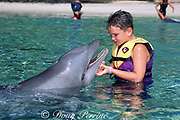 child interacts with trained bottlenose dolphin, Tursiops truncatus, Dolphin Quest, Waikoloa, Hawaii (editorial use only - no advertising; not to be used to promote anti-captivity campaigns)