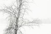Tree during snowfall on a farm.
