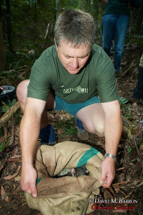 Kevin Schroder Releasing Mountain Brushtail Possum