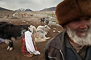 A woman milk a yak, at the Kyrgyz settlement of Bozoi Gumbaz, before Chaqmaqtin lake, Amon Boi's camp...Trekking through the high altitude plateau of the Little Pamir mountains (average 4200 meters) , where the Afghan Kyrgyz community live all year, on the borders of China, Tajikistan and Pakistan.