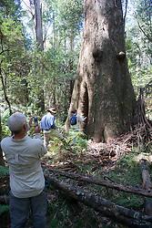 Hugh Maughan Photographing Tree