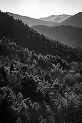 Winter forest, on the Canigou, Pyrenees Orientales, France