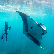 Freediver with oceanic manta ray (Mobula birostris),  Santiago Island, Galapagos, Ecuador.