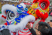 Sjhaking hands with a Flying Lion for good luck - Chinese New Year Celebrations in London 2018 marking the arrival of the Year of the Dog. The Event started with a Grand Parade from the North East side of the Trafalgar Square and finishing in Chinatown at Shaftesbury Avenue. It was organised by London Chinatown Chinese Association and is supported by The Mayor of London and Westminster City Council.