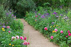 Alliums and peonies in the Pillar Garden at Hidcote Manor Garden