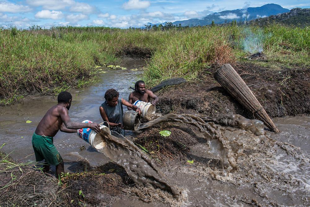 Dani tribe fisherman (Arfine)<br /> Budaya village<br /> Suroba<br /> Trikora Mountains<br /> West Papua<br /> Indonesia<br /> Draining pond after building dyke