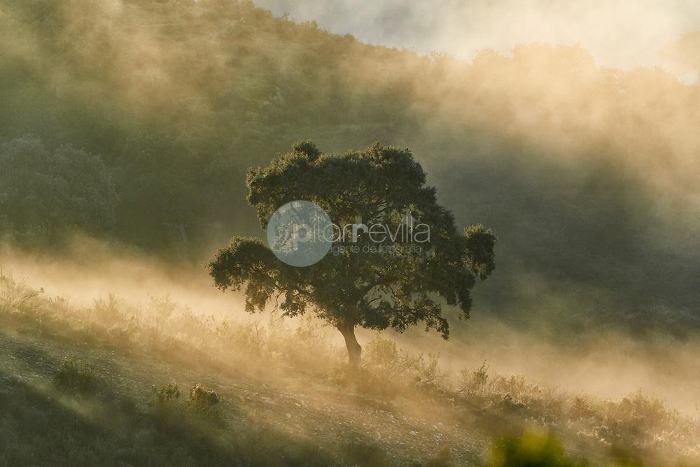 Amanecer en Sierra Morena