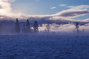 Misty Sunrise, Indian Valley, Greenville, Sierra Nevada Mountains, California Ranches, Snow Scenes, Ponderosa Pine, Sierra Mist