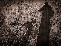 shadow on the ground and grasses of a man standing beside a bicycle in sepia, monochrome, high contrast, abstract