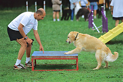 Asking Dog To Get On Table