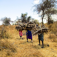 A group of women carrying wood walking back to their homes.