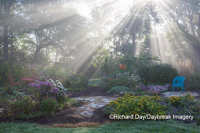 63821-23716 Sun rays in fog in flower garden, Marion Co., IL