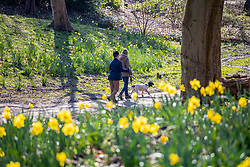 © Licensed to London News Pictures. 22/03/2021. London, UK. Members of the public enjoy the spring flowers and sunshine in Cannizaro Park in Wimbledon, South West London this morning as weather forecasters predicting a sunny and mild week ahead with highs of 14c. Photo credit: Alex Lentati/LNP