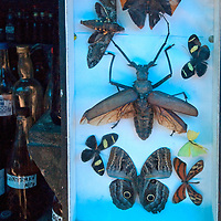 A display of giant Amazon insects decorates a shop selling potions in an outdoor market in upper Belem, a crowded neighborhood in Iquitos, Peru.