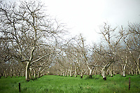 Almond Orchard in California Central Valley. Drive By Photography. Image taken with a Nikon D3s and 50 mm f/1.4G lens (ISO 220, 50 mm, f/1.4, 1/1600 sec).