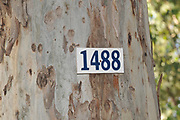 Eucalyptus tree marked with an identification number for a Tree survey. Photographed in Israel
