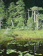 Alaska, Juneau, Douglas Island.  Wetlands along the Treadwell Ditch hiking trail.