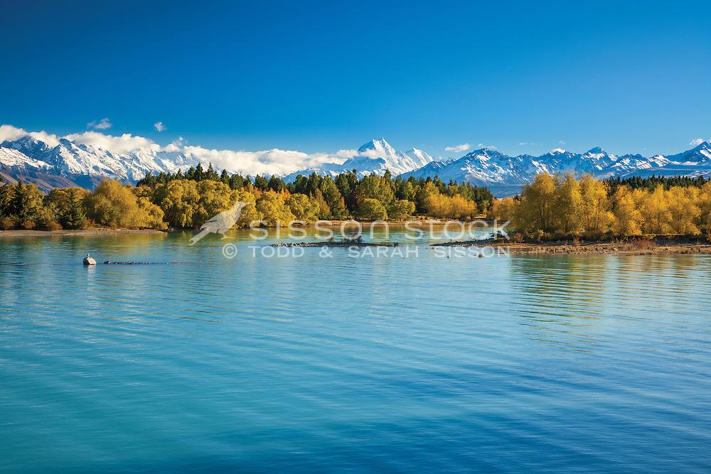 Image of vivid Autumn colours on the shores of Lake Pukaki. Mackenzie Country, South Canterbury South Island New Zealand.