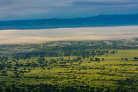 A fog bank sits over the savannah near Queen Elizabeth National Park, Rubirizi District, Uganda.