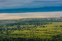 A fog bank sits over the savannah near Queen Elizabeth National Park, Rubirizi District, Uganda.