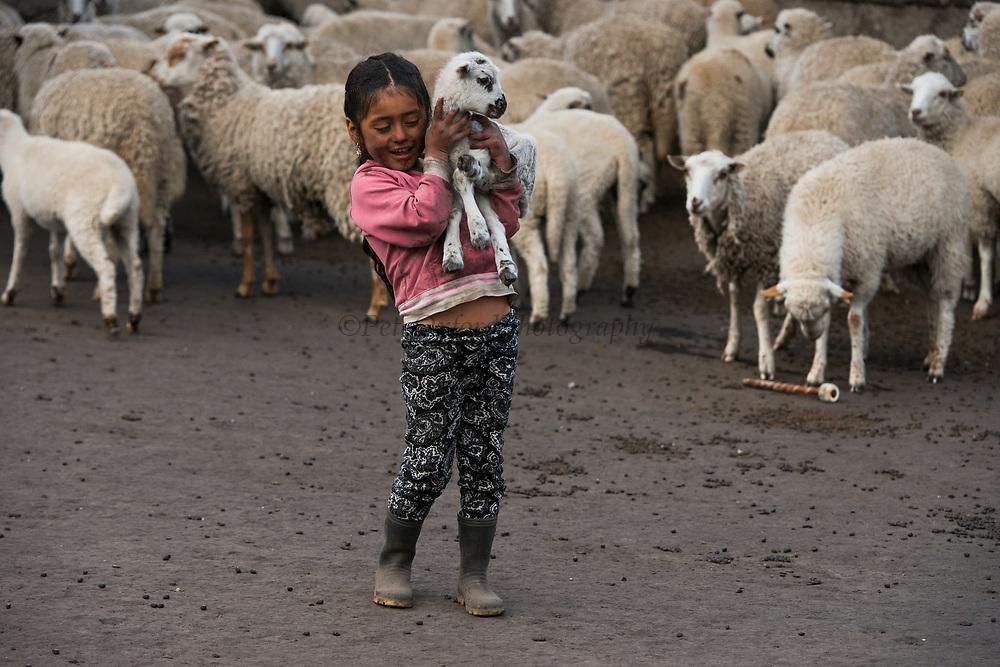 Indian child & lamb Melany Jaya<br /> Pulingue San Pablo community<br /> Chimborazo Province<br /> Andes<br /> ECUADOR, South America