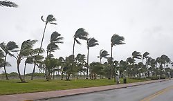 A view of the wind blowing the palm trees at Lummus Park on Miami Beach as the outer bands of Hurricane Irma reach South Florida early on Saturday, September 9, 2017. Photo by David Santiago/El Nuevo Herald/TNS/ABACAPRESS.COM