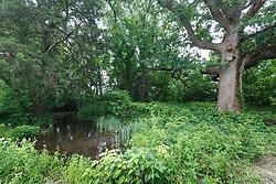 Big Spring and historic burr oak, Great Trinity Forest, Dallas, Texas, USA