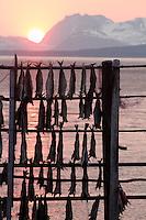 Solnedgang over Senjafjellene sett fra Andørja, snart midnattssol - Sunset over the Senja mountains as seen from Andørja. It will soon be midnight sun