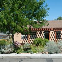 Desert plants grow in a xeriscaped garden in Bishop, California.