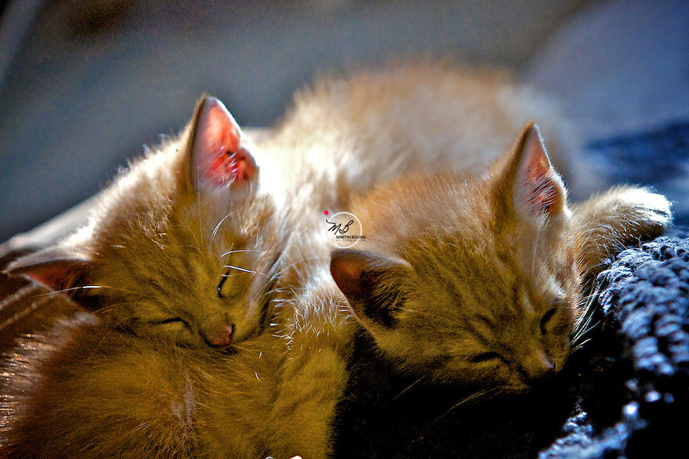 Kittens Napping 2